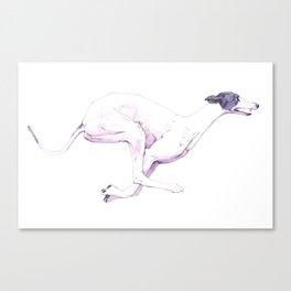 The White Saluki With Gray Muzzle Canvas Print