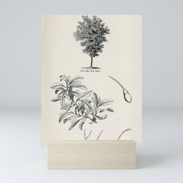 Tree Sassafras tree2 Mini Art Print