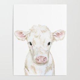 Baby White Cow Calf Watercolor Farm Animal Poster