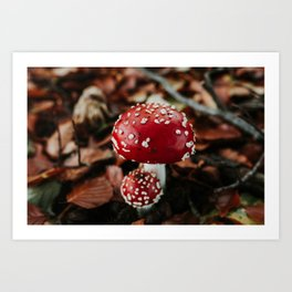 Mushroom in the autumn forest: red with white dots | Colourful Travel Photography | Veluwe, Holland (The Netherlands) Art Print