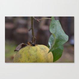Apple & Wasp (Vespula Vulgaris) Canvas Print