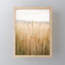 Fields of Gold | Botanical grain field detail | Tuscany Italy Fine art travel photography  Framed Mini Art Print