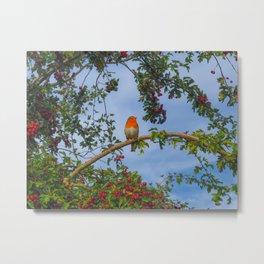 European Robin in a Hawthorn Tree Metal Print