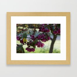 Last Snow on First Blooms Framed Art Print