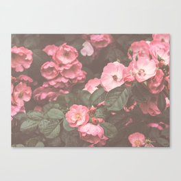 Pink Flowers in the Morning Canvas Print