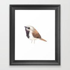 Black Throated Sparrow Framed Art Print