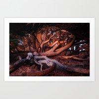 ahs Art Prints featuring AHS Cypress, Big Sur by Anna Howard Studios