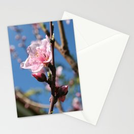 Delicate Buds of Peach Tree Blossom Stationery Cards