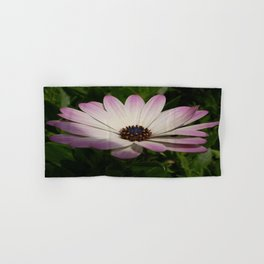 Side View of A Pink and White Osteospermum Hand & Bath Towel