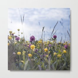 Buttercups and clover Metal Print