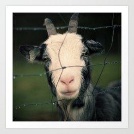 The Goat II Art Print