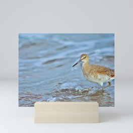 Wading Willet Mini Art Print