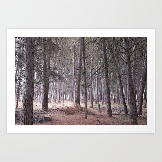 Magical light in the forest Art Print