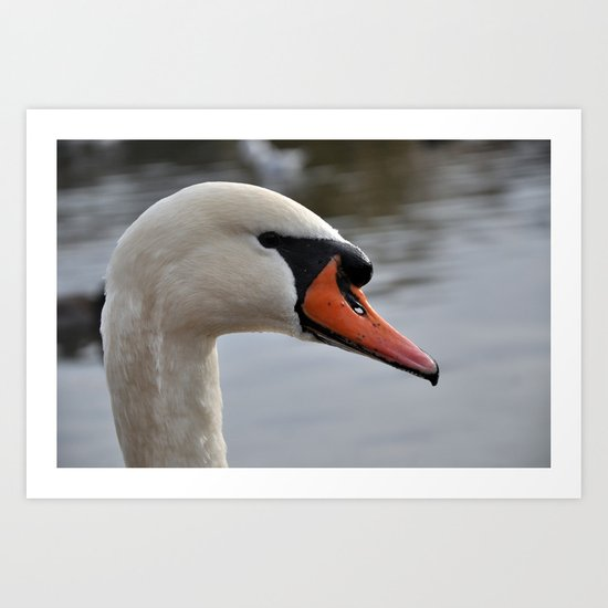 Swan portrait Art Print