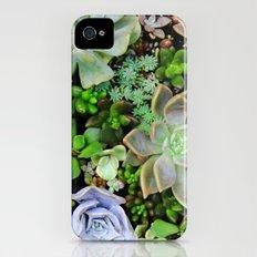 Collection of Succulents iPhone (4, 4s) Slim Case