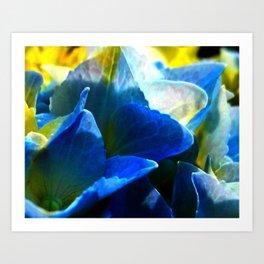 Hydrangea Blue Art Print