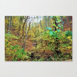 Brent's Gap Canvas Print