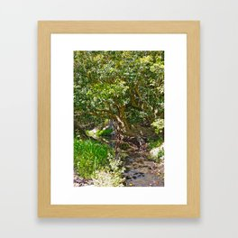 Wise old tree Framed Art Print