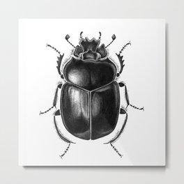 Beetle 13 Metal Print