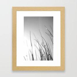 B&W Grass Blades Framed Art Print