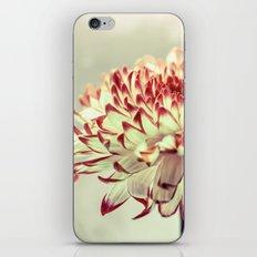 Hold onto the light - A chrysanthemum flower in window light iPhone & iPod Skin