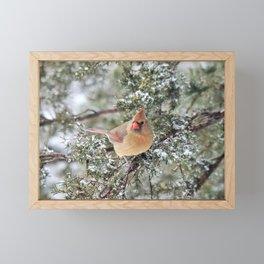 Frosty Female Cardinal Framed Mini Art Print