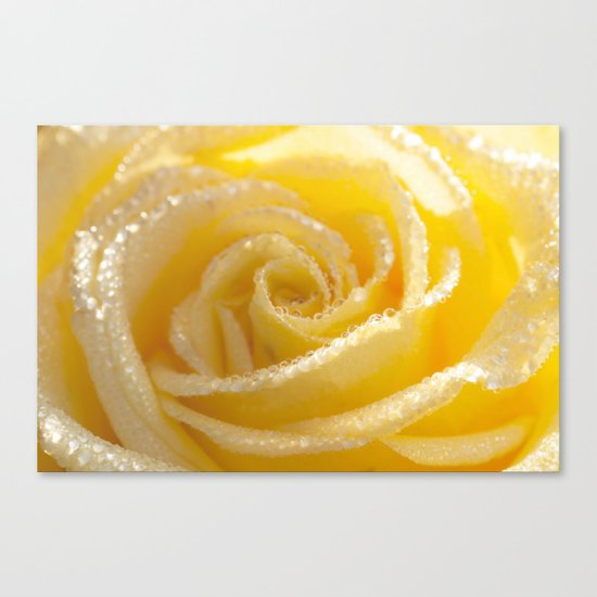 Yellow Romance - Yellow Rose with sparkling waterdrops - Roses Canvas Print