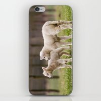 lamb iPhone & iPod Skins featuring lamb by Marcel Derweduwen