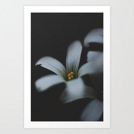 Detailed flower Art Print