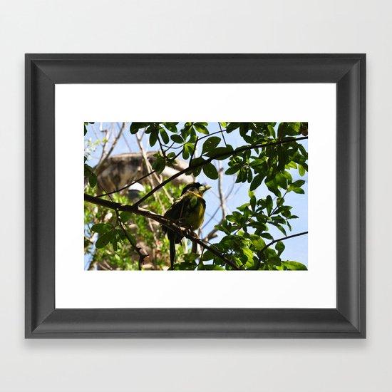 Bird I Framed Art Print