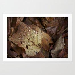 Autumn Droplet Art Print