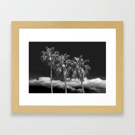 Palm Trees in Black and White on Cabrillo Beach Framed Art Print