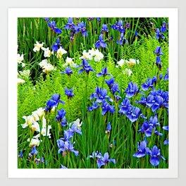 BLUE & WHITE  IRIS FLOWER GARDEN Art Print