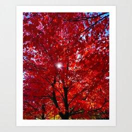Sun Through Maple Leaves Art Print
