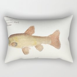 Antique fish engraulis australis anchovy drawn by Fe Clarke (1849-1899) Rectangular Pillow