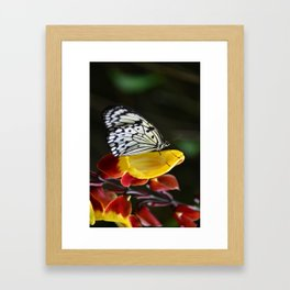 Tree Nymph Butterfly Framed Art Print