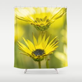 The beauty of yellow daisies Shower Curtain