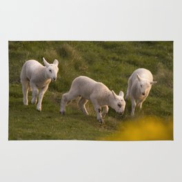 three little lambs Rug