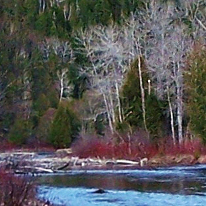 River in Nature Leggings