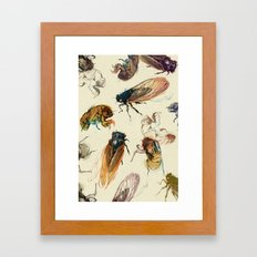 summer cicadas Framed Art Print