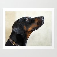 doberman Art Prints featuring Doberman by lifeandthat photography