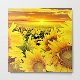 Sunflower fields with golden sky - Jéanpaul Ferro Metal Print