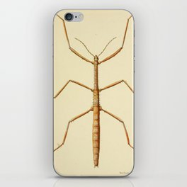 Antique Stick Insect iPhone Skin