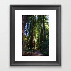 Redwood forest  Framed Art Print