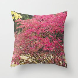 Burning Bush 1 Throw Pillow