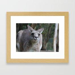Kangaroo Blepping Framed Art Print