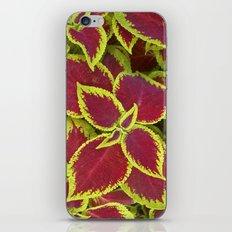 flower power II iPhone & iPod Skin
