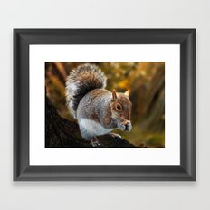 Squirrel nutkin Framed Art Print