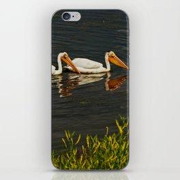 Pelicans in Edmonton - Hermitage iPhone Skin