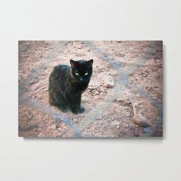 black cat. Metal Print